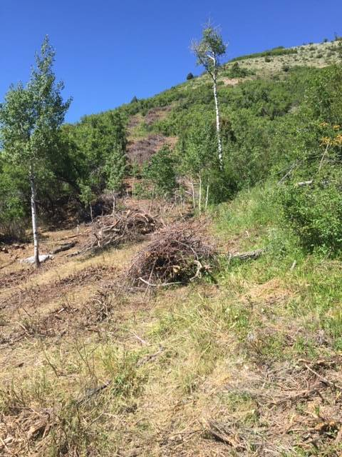 Causey Estates Community Defends Against Wildfire Threats