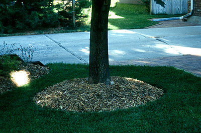 Mulching Is Important For Tree Health Forestry Usu
