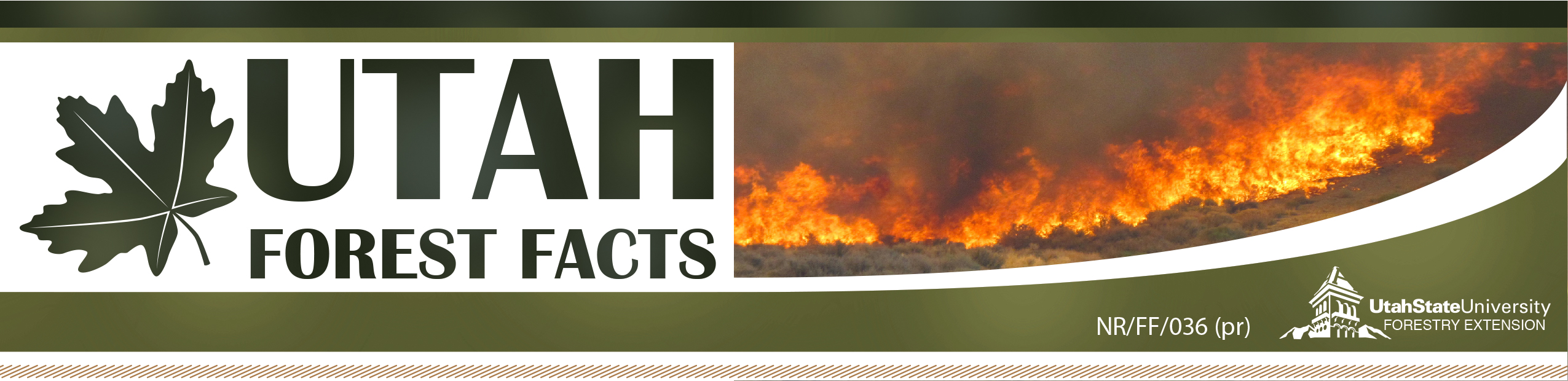 Protect Your Home from Wildfire: Ember Awareness Checklist - Utah Forest Fact Sheet 036
