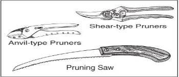Pruning Landscape Trees: An Overview