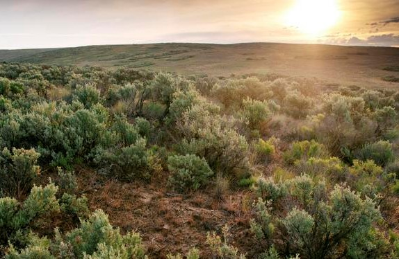 Sagebrush steppe landscape in Wyoming. Photo by Hannah Letinich.