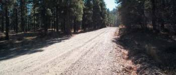010 - Managing Forests for Water Quality: Forest Roads