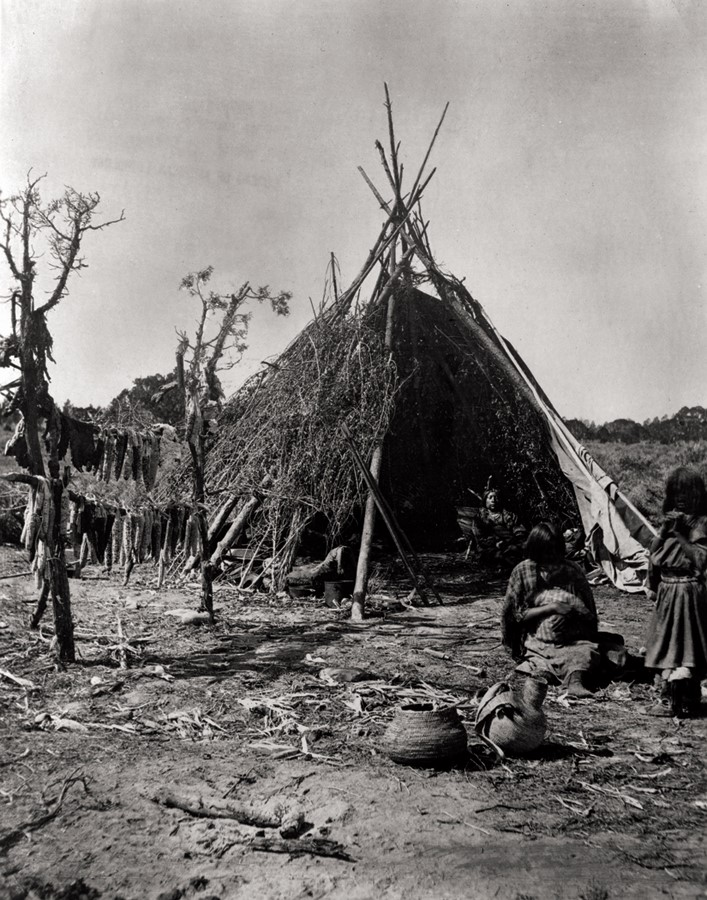 Lodgepoles used for the home of a Ute chief in the eastern Wasatch Mountains, Utah