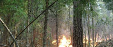 025 - Prescribed Fire on Public Lands