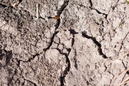 Clay soils may form cracks or crusts as seen in this soil located at a construction site.