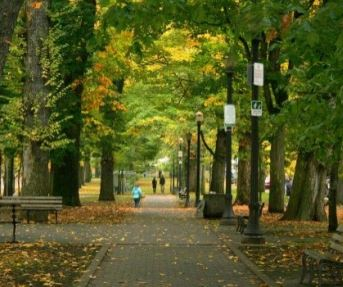 Urban canopy in Portland, OR. Photo credit: Portland Parks and Recreation